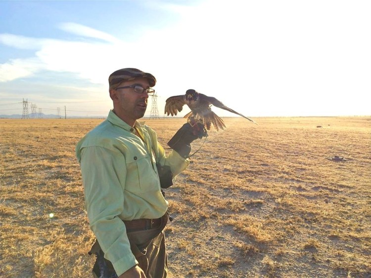 Vahe's passion for the sport of falconry started at the age of seven with a Eurasian Kestrel.