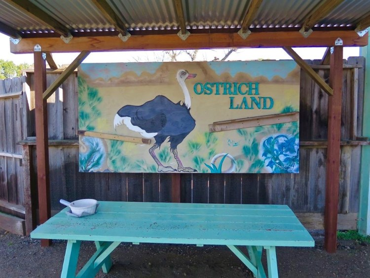 Brown turned a bare-bones operation, comprised of a few birds and a simple shed stocked only with ostrich meat, into an upscale boutique and thriving attraction for wildlife lovers of all stripes.
