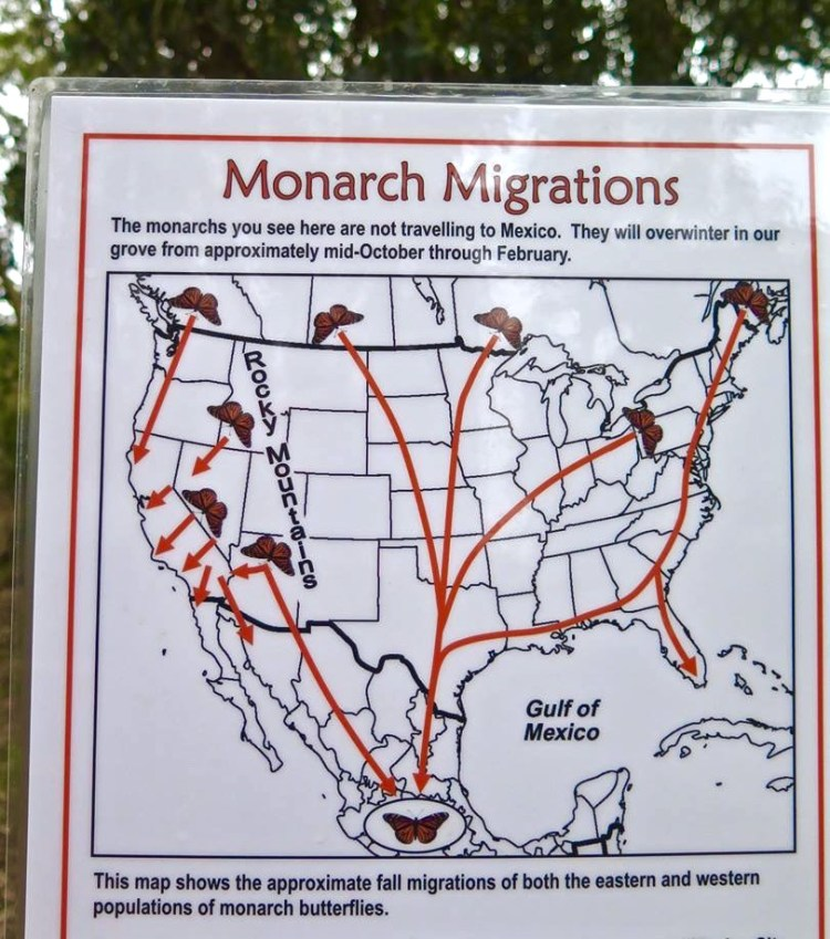 Without any guidance, these insects inherently know how, when and where to migrate across continents—and it takes four generations to make the yearlong trek. The monarch butterfly exhibits the most highly evolved migration pattern of any known species of butterfly or moth and perhaps any known insect.