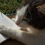寝起きに本を読むようにしたら何となく調子がいい