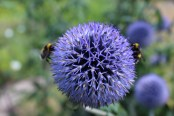 Flower with symmetric Bees