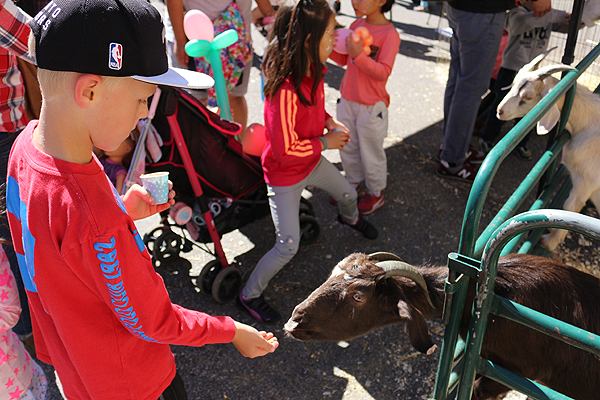 GETTING ONE'S GOAT: Kane Grayson, 6, feeds one of the feisty goats at the Harvest Fair petting zoo.