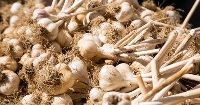 Garlic at Toronto Garlic Festival