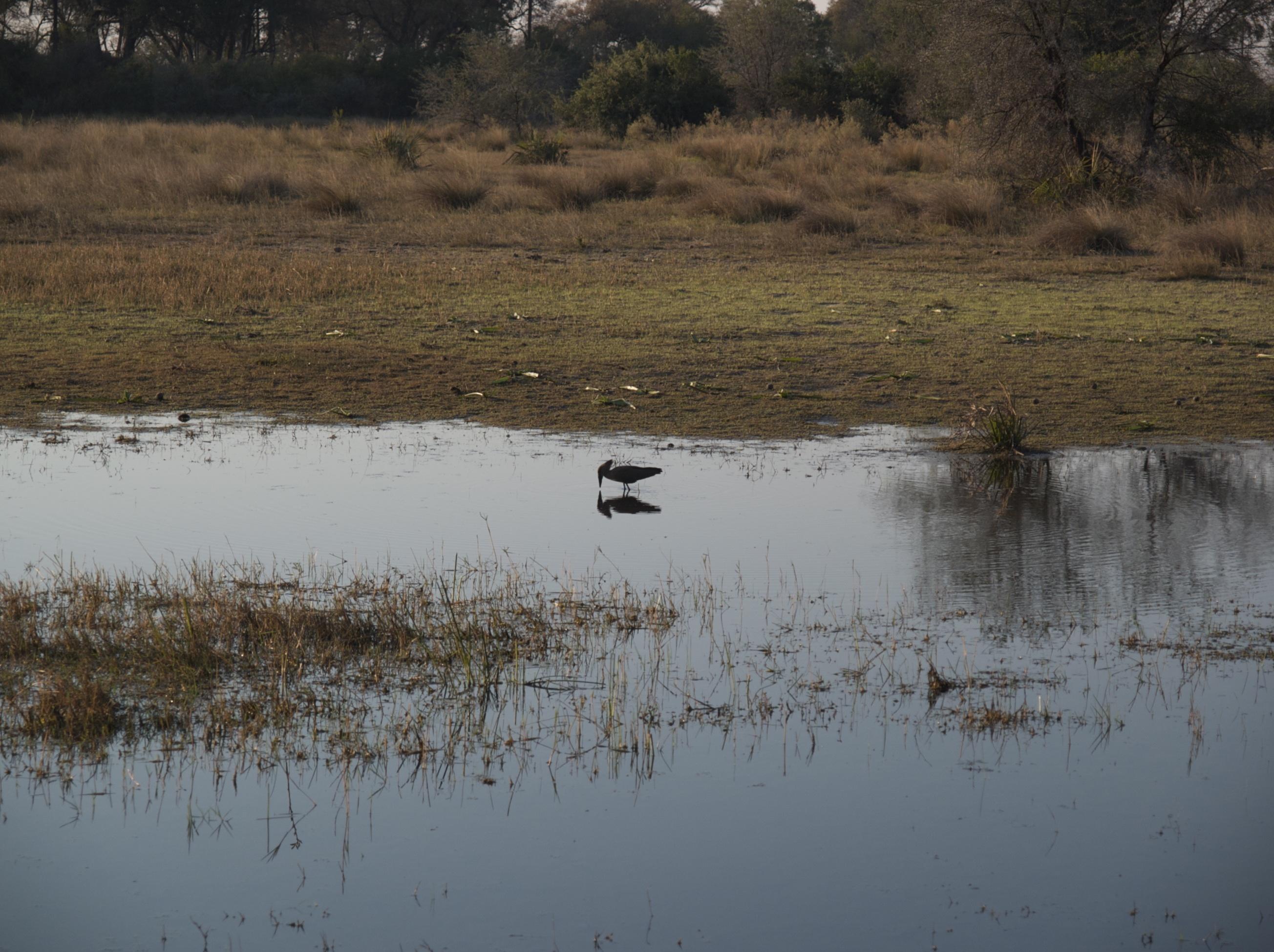 Bird Tubu Tree Marsh