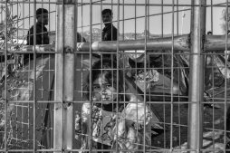 Young girl looking out from the fence around the registration center in Moria, Lesvos.