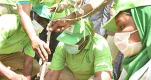 Gombe Goes Green Project 3G tree planting