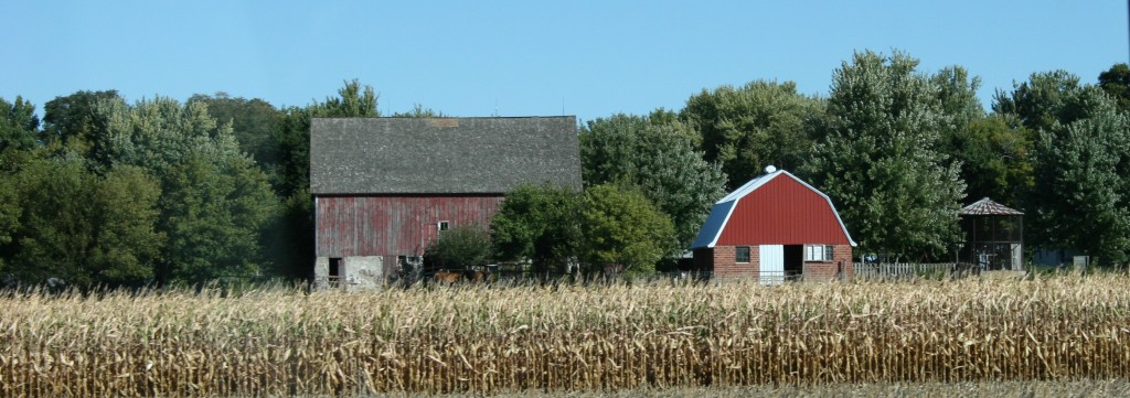 Barns and ripening crops define the landscape of southwestern Minnesota this time of year.