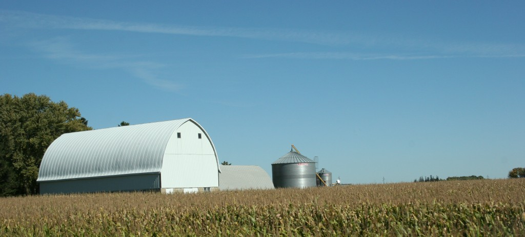 Barns, like this one, loom above the soon-to-be-harvested fields.