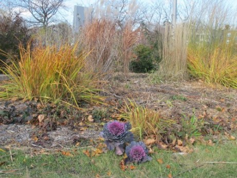A section of the MnDOT public garden tended by Jeanne Weigum.
