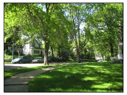A tree-lined street in Iris Park