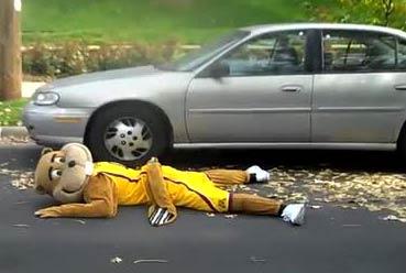 roadkill-goldy