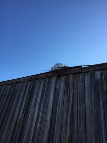 Bird nest on top of sound barrier