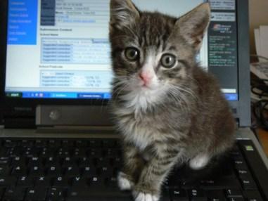 Kitten Reading Internet Comments