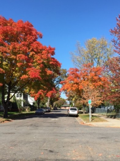 Fall colors at Griggs and Dayton