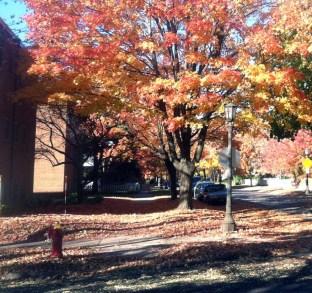 sidewalk-in-fall