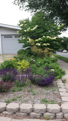 One of the Many Gardens Near the Garden Center (Specifically, at 60th and Russell)