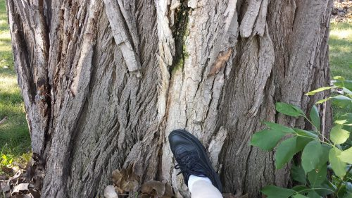 Base of Largest Tree in Glueck Park (Men's Size 8M Shoe for Scale)
