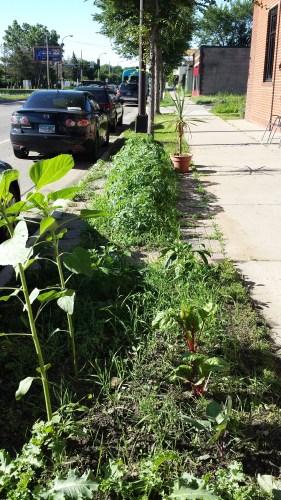 Boulevard Vegetables Outside Turbo Tim's