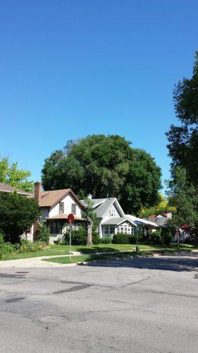 A Big Tree in the 2900 Block of Hayes Street NE