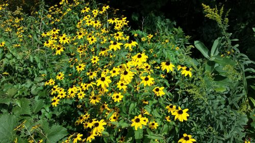 More Flora