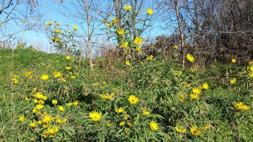 Roadside Flowers on November 16th