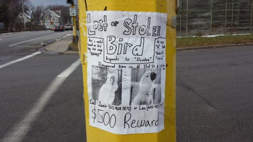 "Poster for Lost or Stolen Bird, Responding to ""Dundee"""