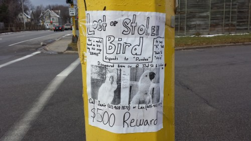 """Poster for Lost or Stolen Bird, Responding to """"Dundee"""""""