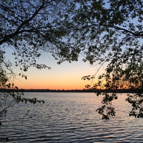 Tree branches framing sunrise over Lake Harriet