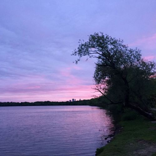 Tree at sunrise at Lake Harriet