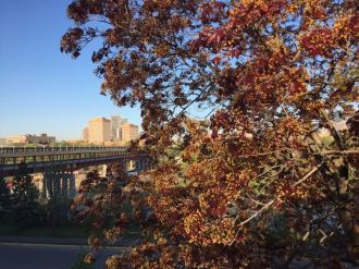 View of Washington Avenue Bridge