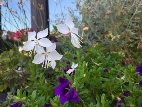 Purple and white flowers in window box