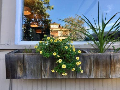 Flower window box