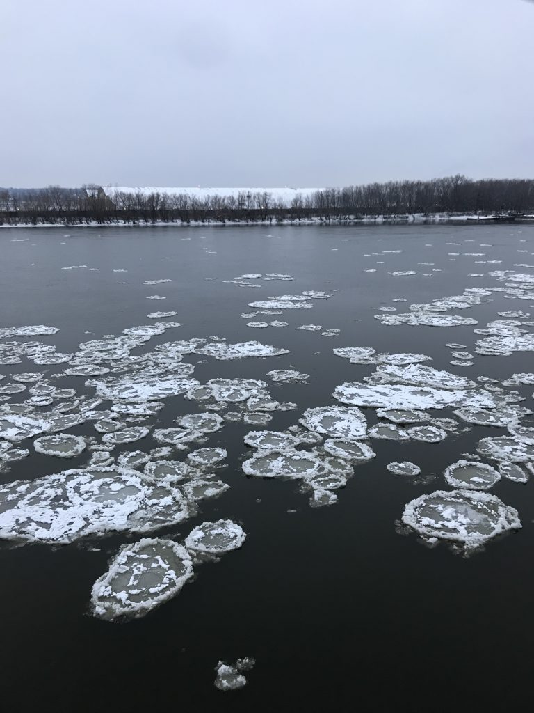 Grey river with large circular chunks of ice, floating in a loose mass. Tree-lined shore in background