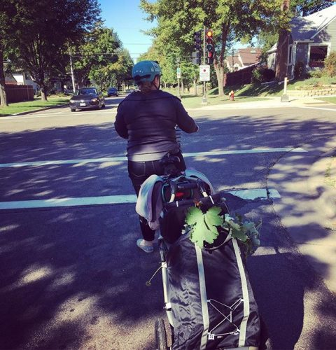 Person on bicycle with trailer filled with plants, at stoplight