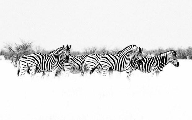 Etosha Animals HeyKey Panorama 03
