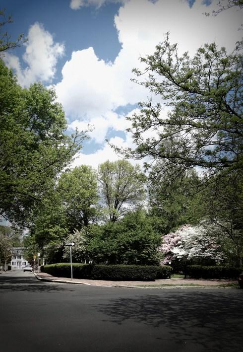 McIntire Park 004