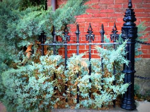 Fences 033