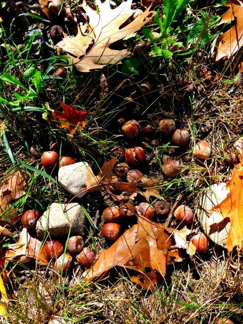 Fall Flowering 3