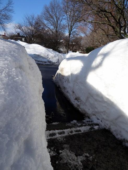 Frozen February 017