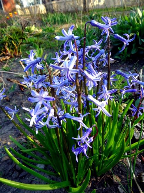 Flowering 041