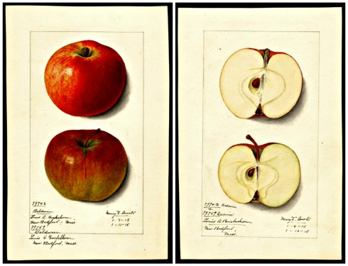 apples-collage