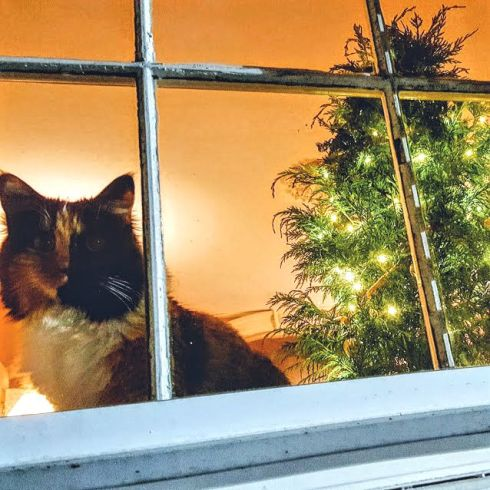 keeping-christmas-window-with-trinity