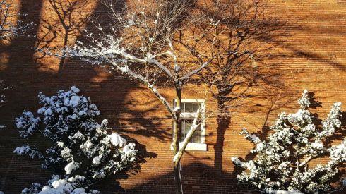 snowy-garden