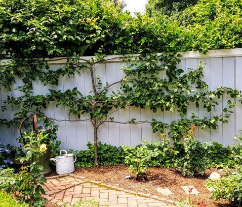 Garden Tour Federal 3