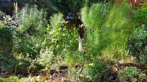 Fall Garden 2