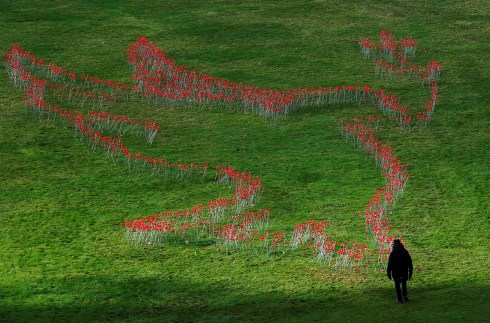 A visitor looks at a dove-shaped formation of thousands of artificial red poppies, made out of red bottle tops, at the Botanic Garden in Meise