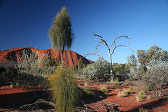 Australian Desert near Uluru