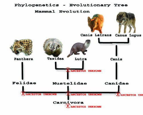 Tree - Phylogenetic