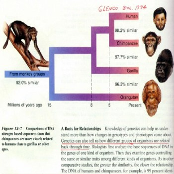 Genetics - Humans - Monkeys