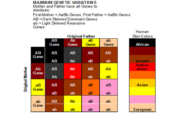 Chart - Variation - Skin - Color - Human